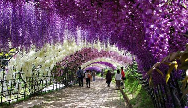 Kawachi-Garden.jpg