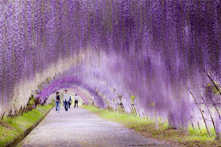 Kawachi_Fuji-Garden.jpg