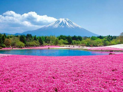 Fuji - Yama, Japon