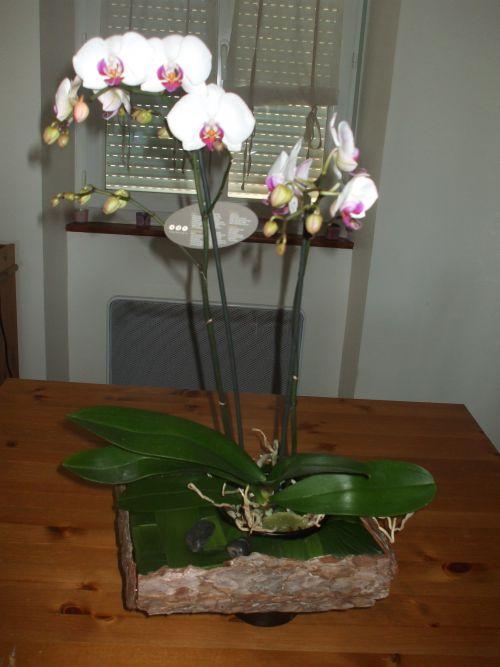 Autour d'une orchidée