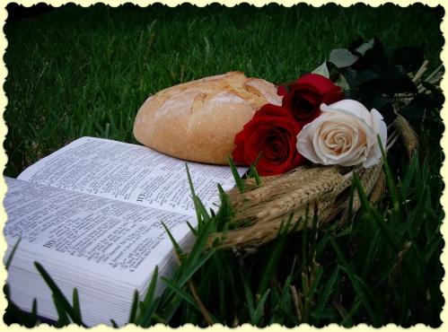 holly bible.jpg