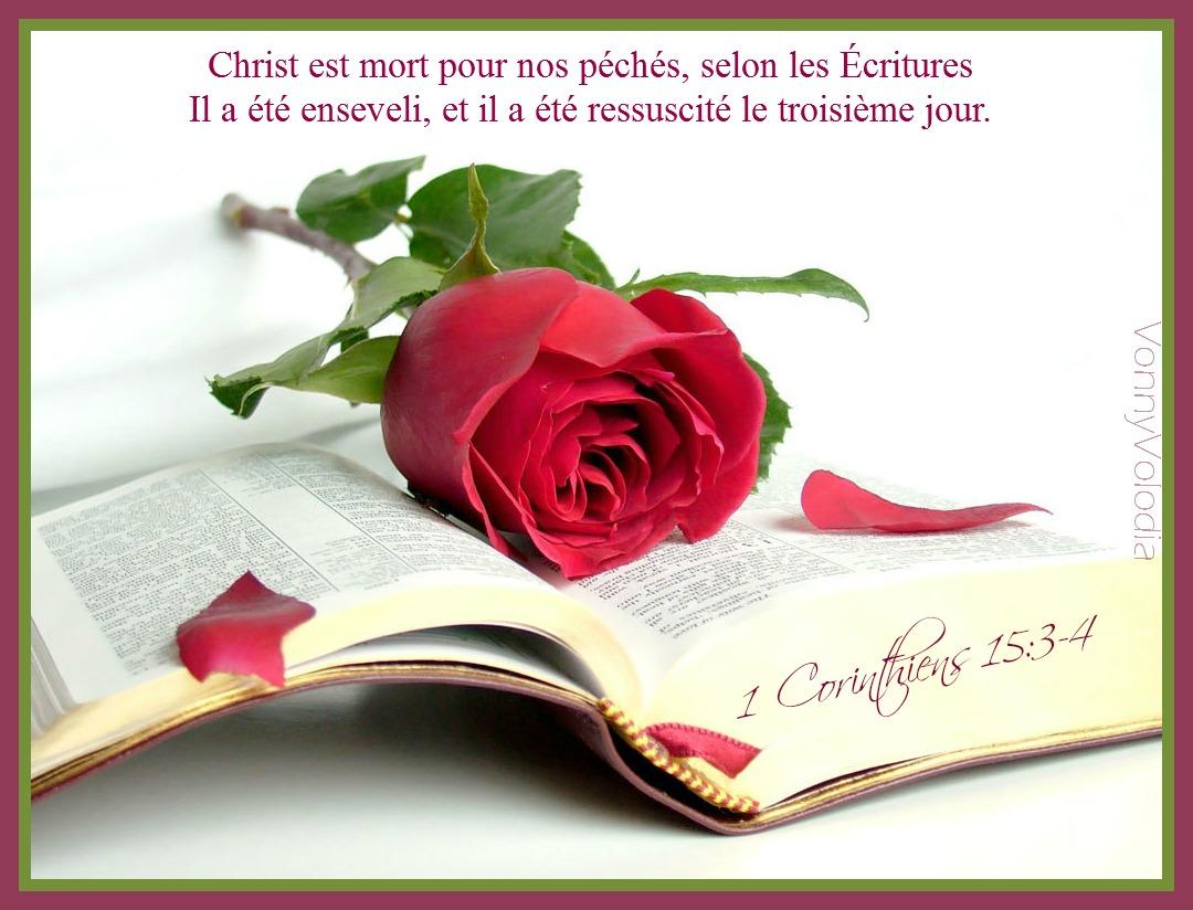 rose bible.jpg