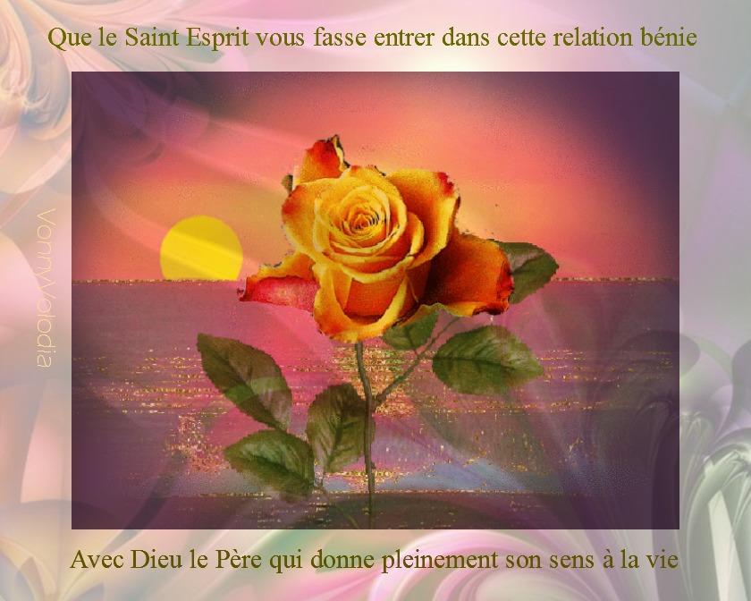 rose mer.jpg