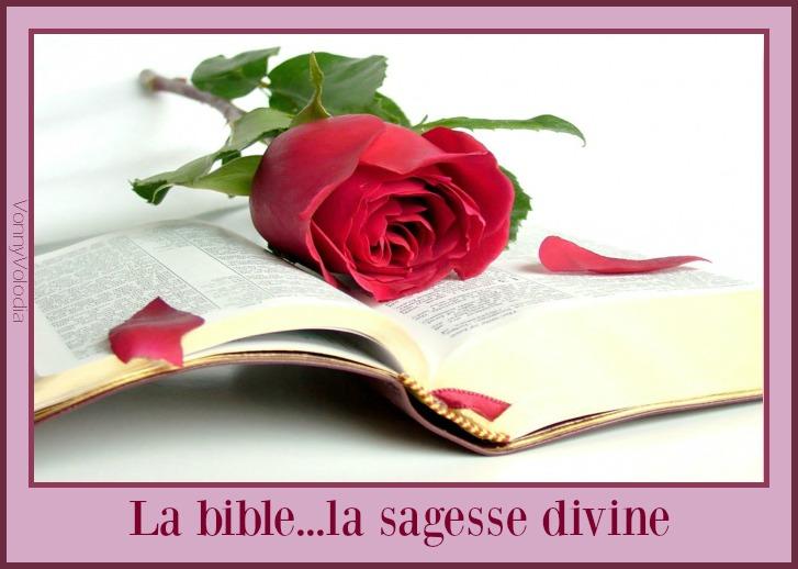 bibliya-roza-kniga-krasota.jpg