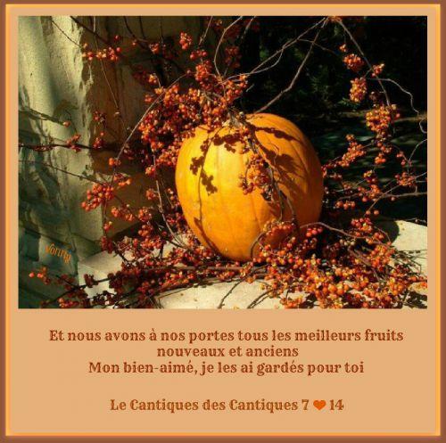 artfichier_335490_1309562_201210122638242.jpg