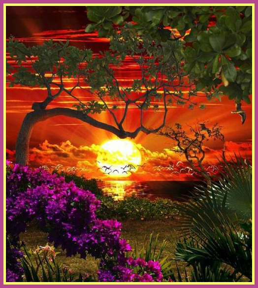 coucher-soleil-arbres-fleurs.jpg