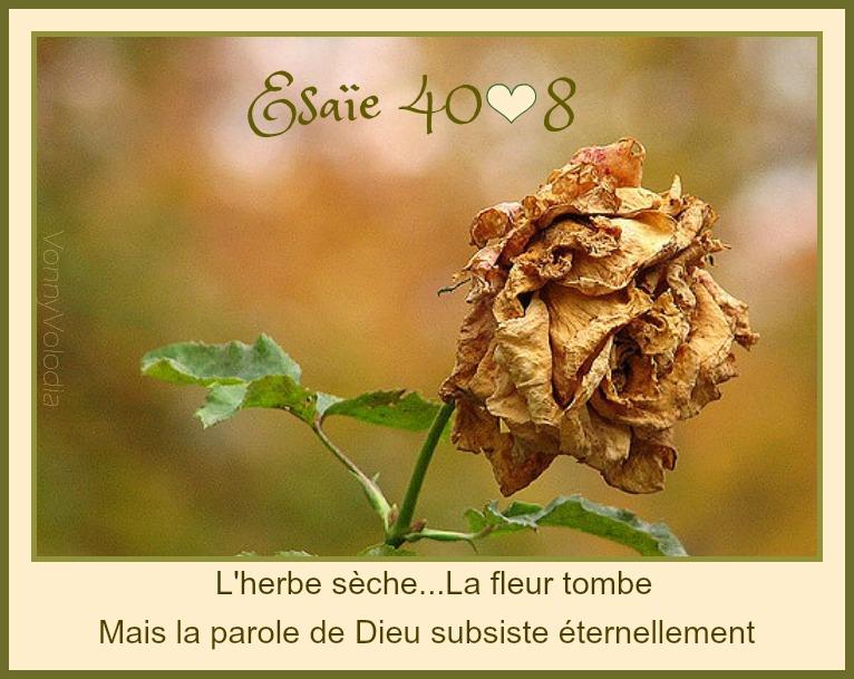 fleur-herbe-parole-Esaïe.jpg