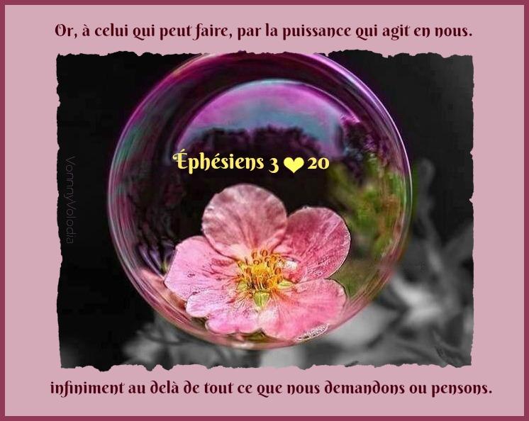 fleur-bulle.jpg