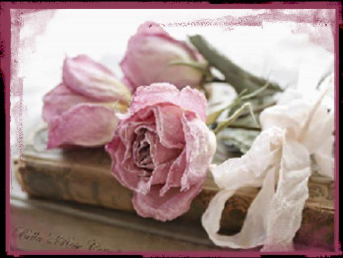 rose-ruban.png