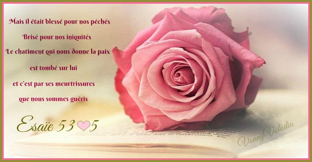 rose-verset.jpg