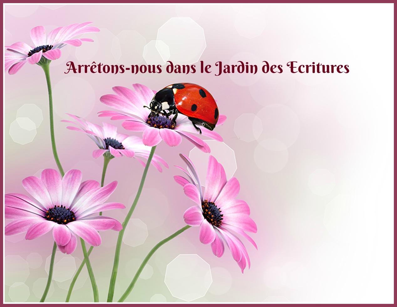 Gerberas_coccinelle.jpg