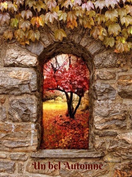 un bel automne.jpg