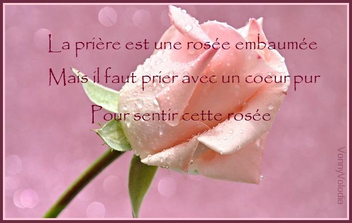 Pink-rose-flower.jpg