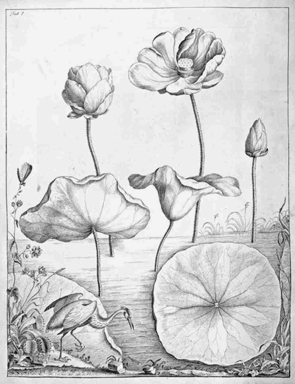 Lotus015.jpg