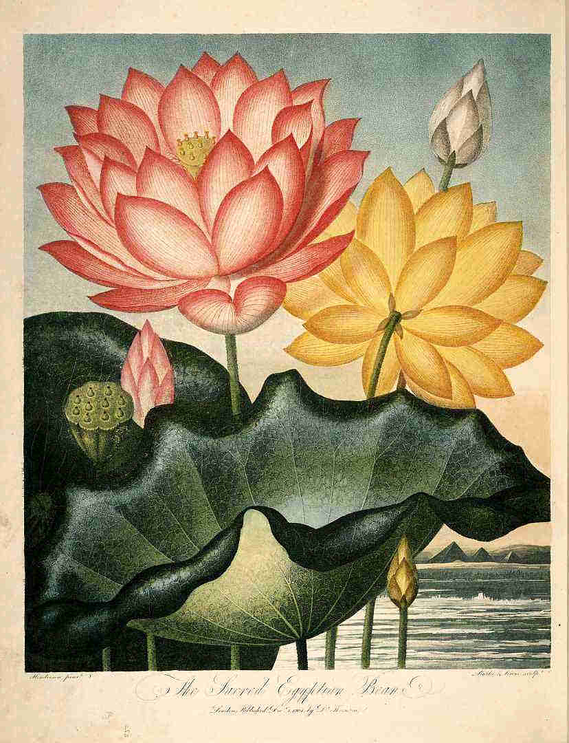 Lotus017.jpg