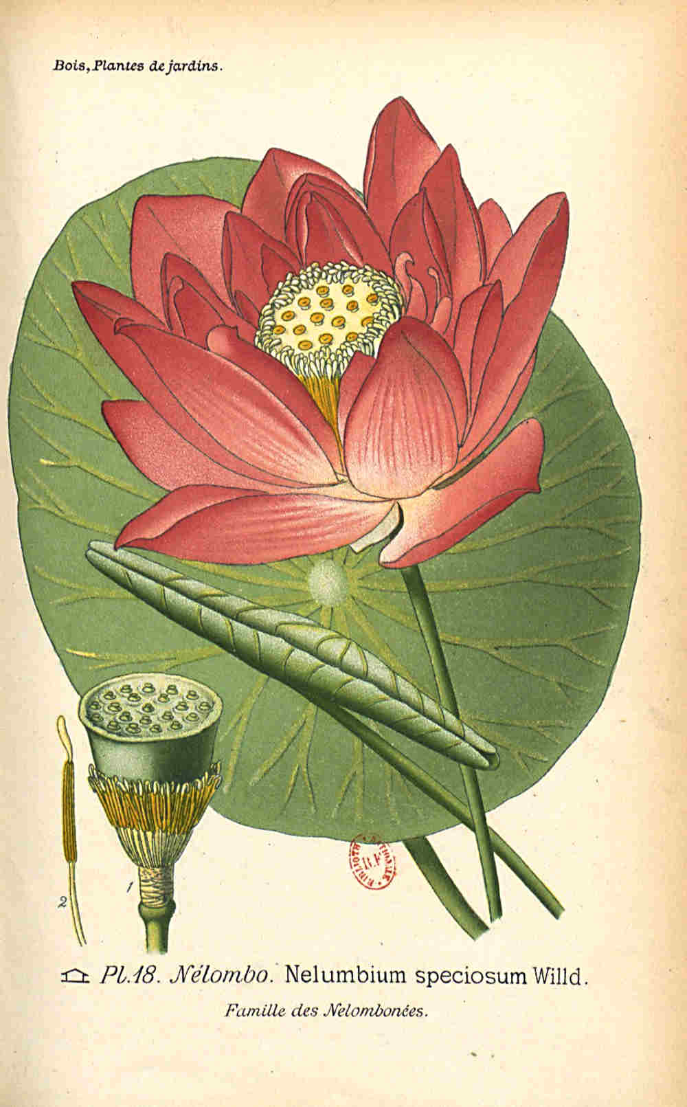 Lotus018.jpg