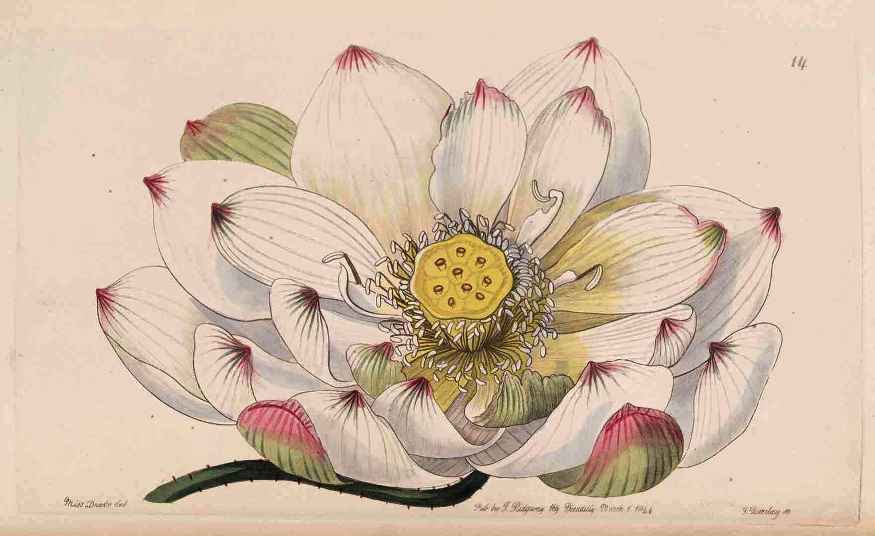 Lotus020.jpg