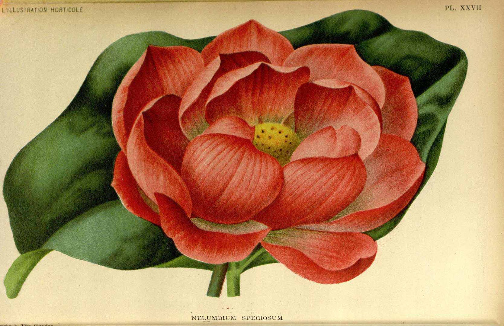 Lotus025.jpg