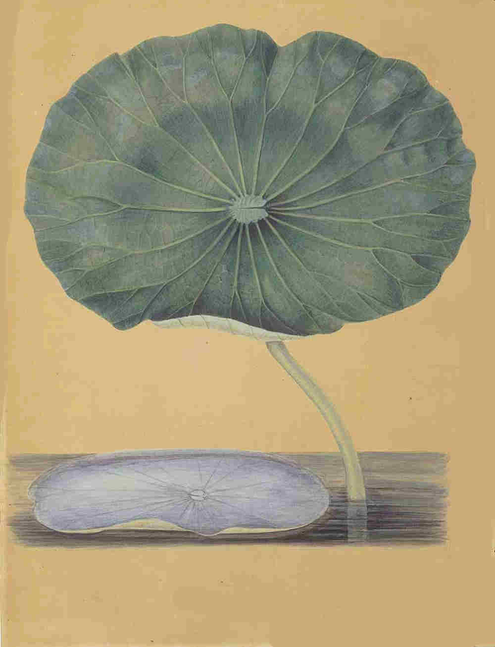 Lotus044.jpg