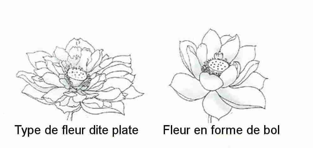 Lotus048.jpg