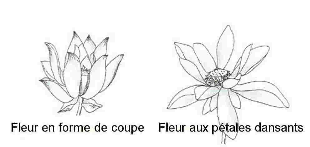 Lotus050.jpg