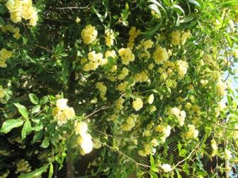 jard printemps (13).JPG