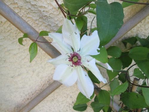printemps2 (1).JPG