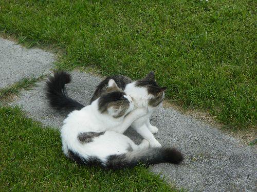 Mes chats grisou et titus