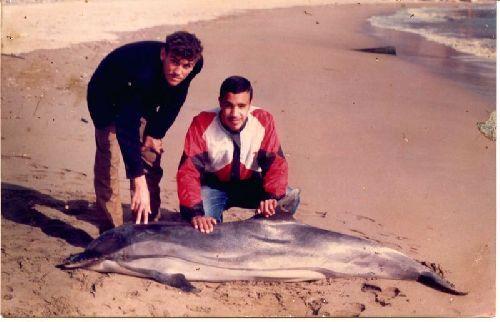 Notre  ami  IMED   devant  un  dauphin  échoué  sur  la  plage