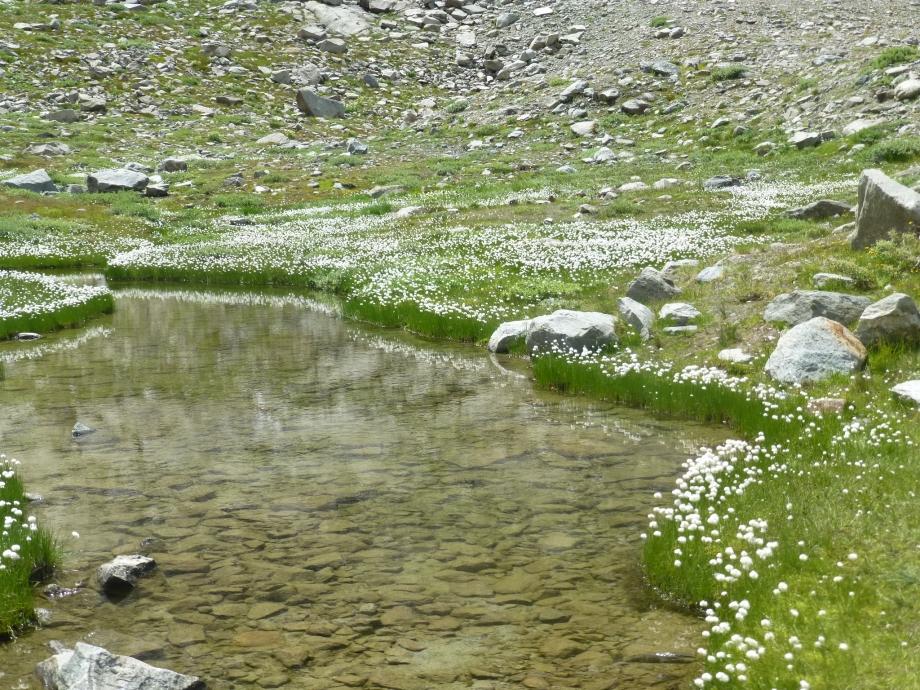 le glacier d'Aletsch (33).JPG