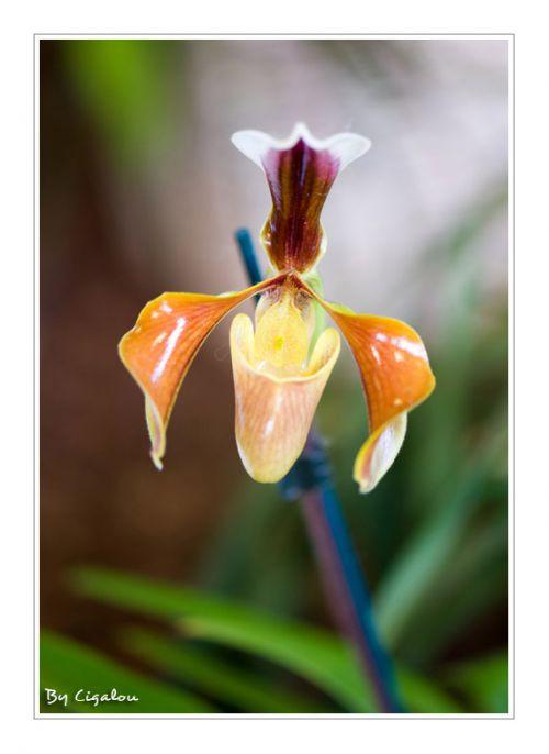 Expo orchidées Vergèze Gard