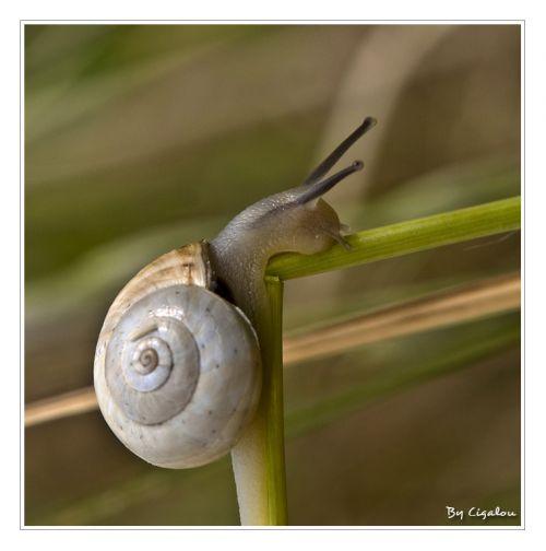 L'escargot m'a montré ses cornes