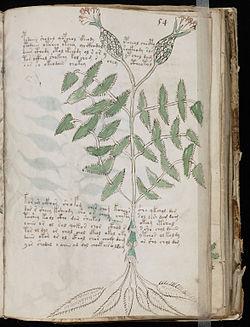 Voynich_Manuscript_(107).jpg