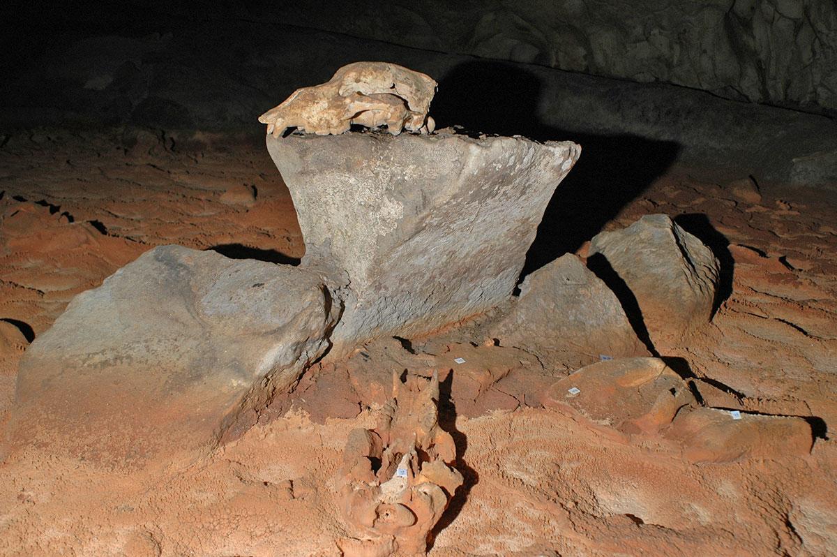 crane-ours-grotte-chauvet-caverne-pont-arc-ardeche.jpg