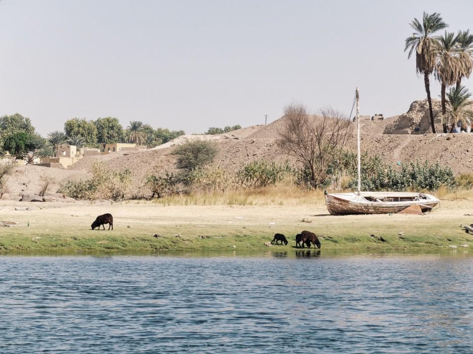Les rives de l'ile éléphantine.jpeg