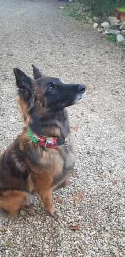 Le beau Légo avec son collier Marvel...5 cm de large...