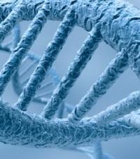 ADN_redimensionner.jpg