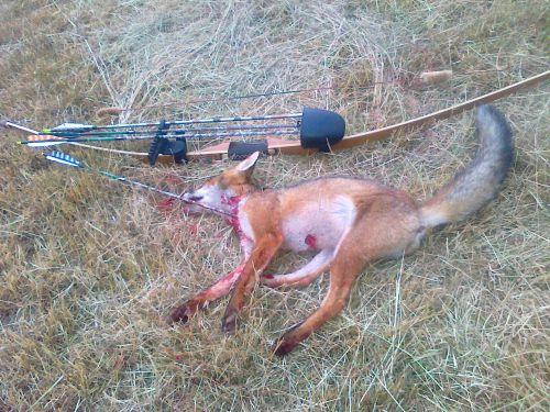 1er renard à l'arc (saison 2011-2012)