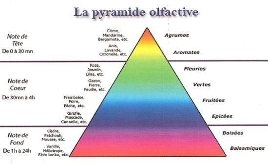 pyramide-olfactive.png
