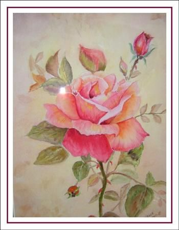 la rose de mon jardin
