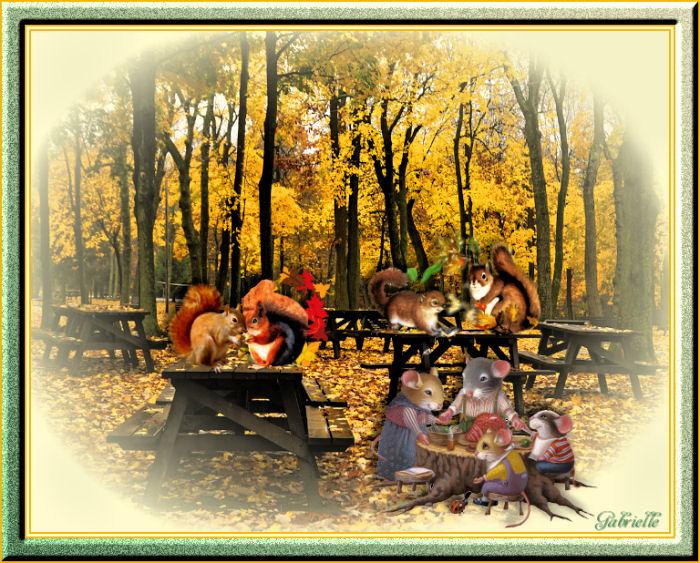 301015 pic nic en forêt.jpg