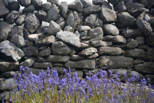 Petit bout du mur quelque part dans le Connemara (album à venir..)