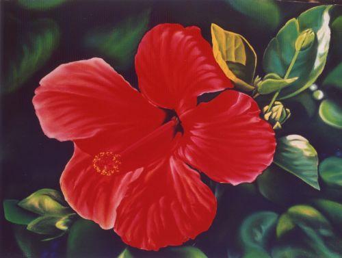 l'hibiscus (2003)   83cm x 63cm