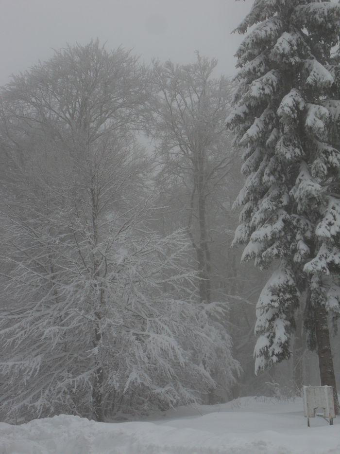 Une belle neige fraiche au rdv hummmmmmmmmmmmmmmmmmmmm