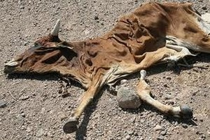 2011_07_24_famine_africa.jpg