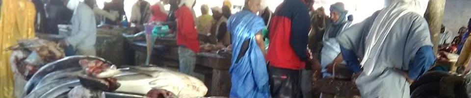 Rejoprao-Mauritanie! Pour une pêche durable