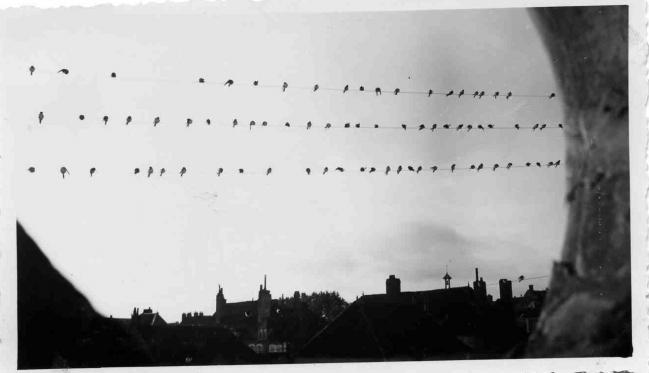 Départ des hirondelles en 1954