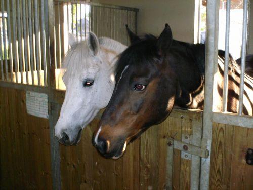 Julie et Grand Duc (poney club de draveil)