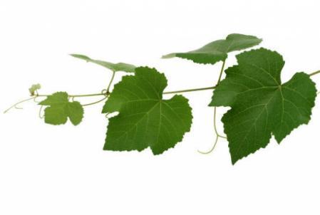blog-702-quiz-feuilles-d-arbres-080809192041-4165292034.jpg