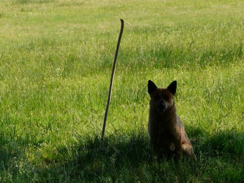 Je garde le bâton de mon berger